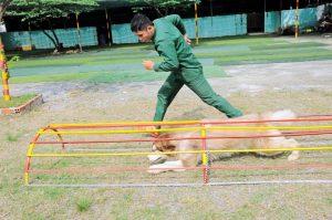 Mẹo huấn luyện chó với bài tập đơn giản tại nhà