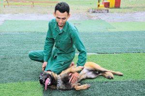 Dịch vụ huấn luyện chó cảnh uy tín tại Tphcm
